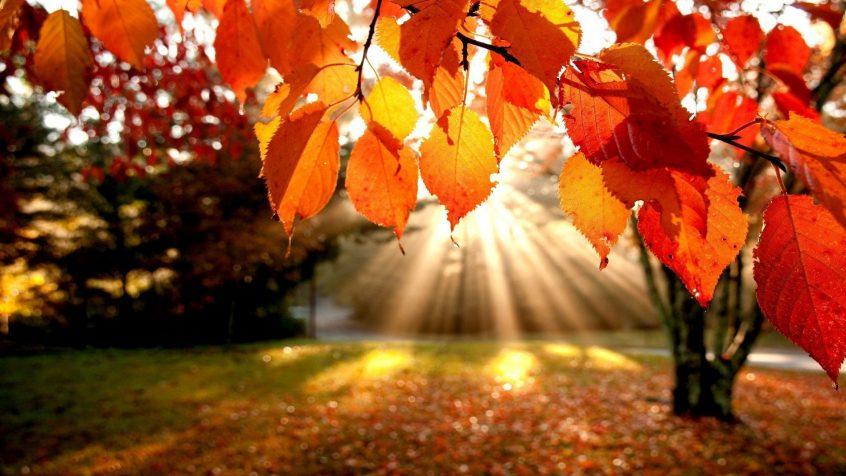 Ross Court-Autumn memories